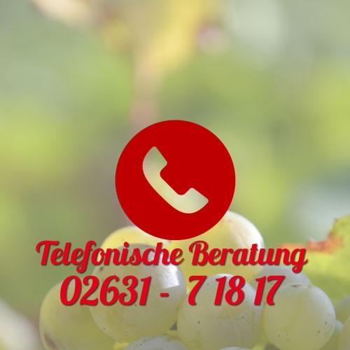 media/image/teleberatung_quadrat_1.jpg